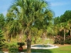 palmetto_palm_tree