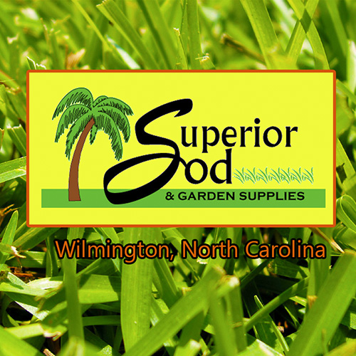 The best place to buy grass seed