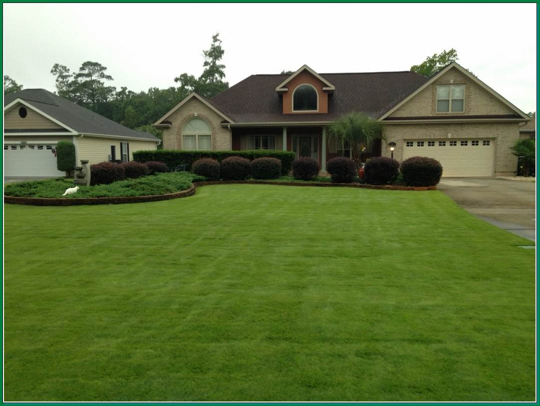 Couponsuperior sod mulch and sod in wilmington for Care for new sod