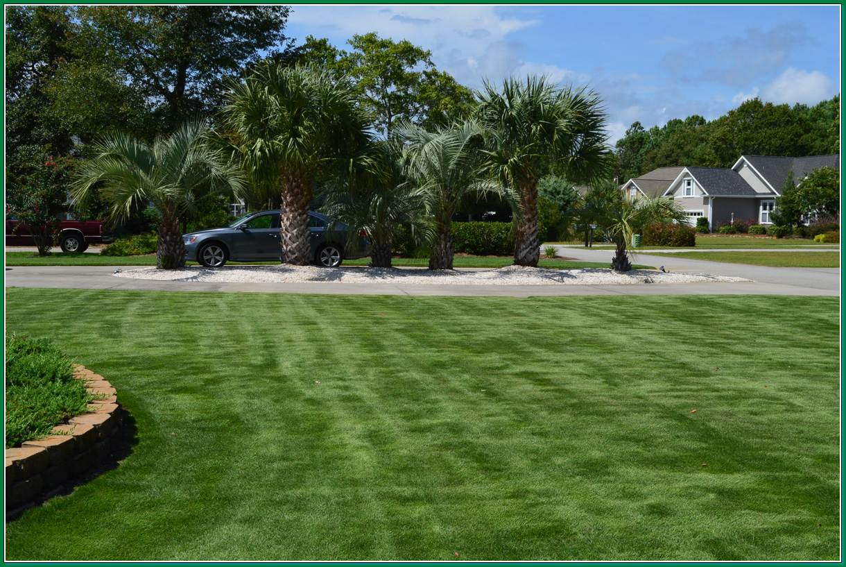 Lawn Care Archives Superior Sod Mulch And Sod In