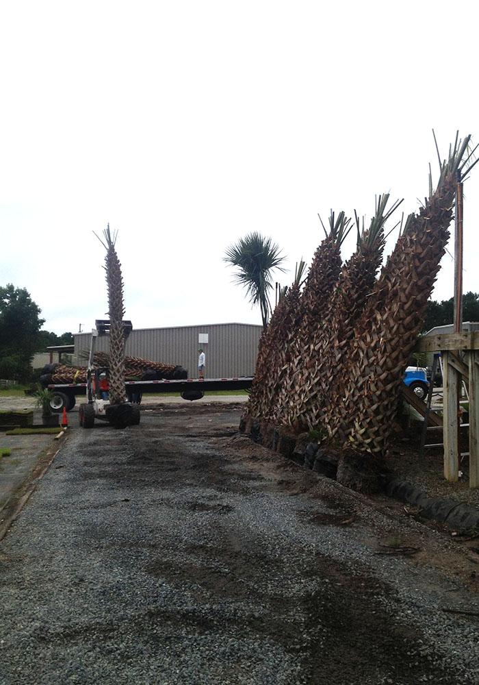 Palm tree unloading