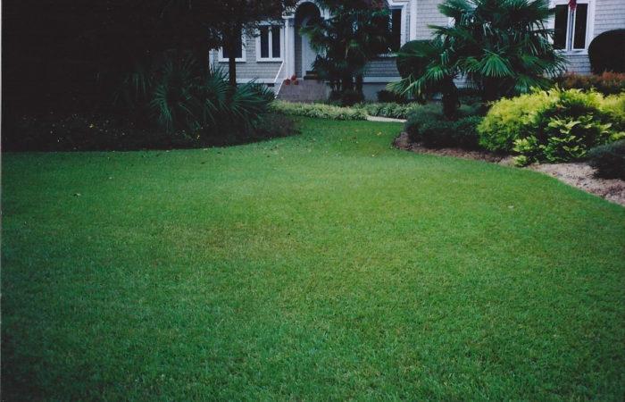 Centipede Lawn