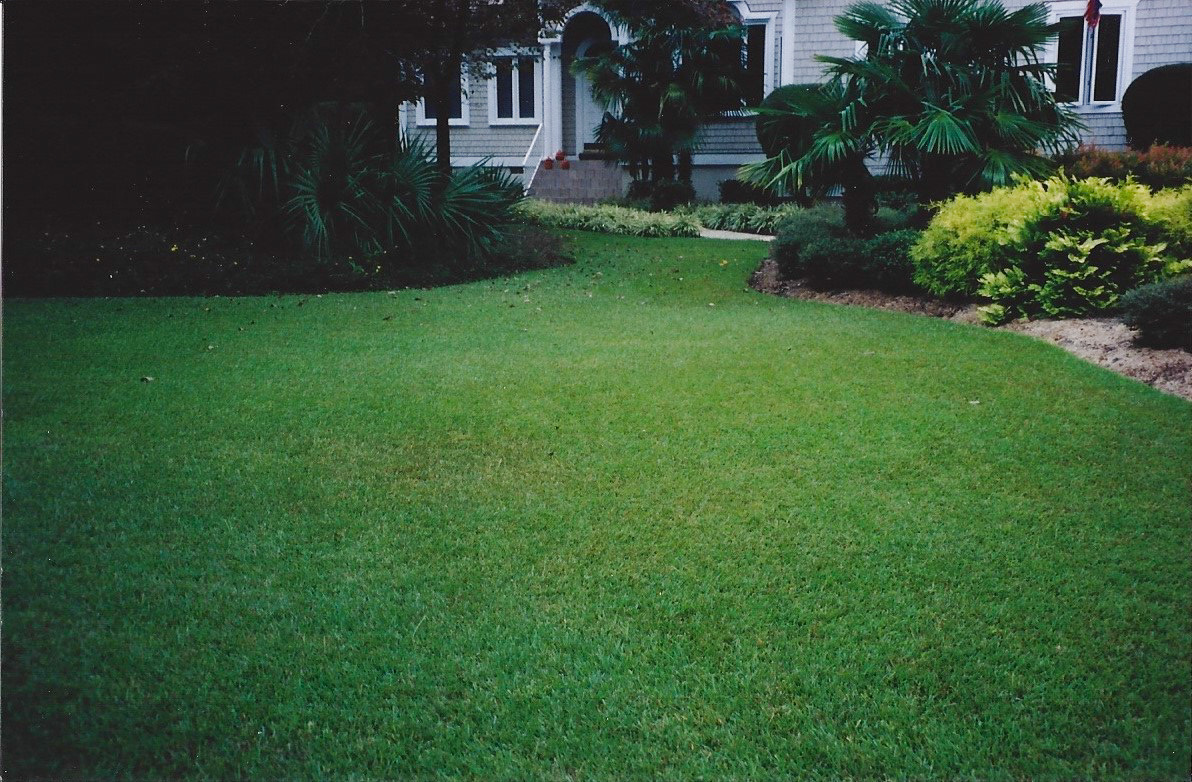 grass varieties superior sod mulch and sod in
