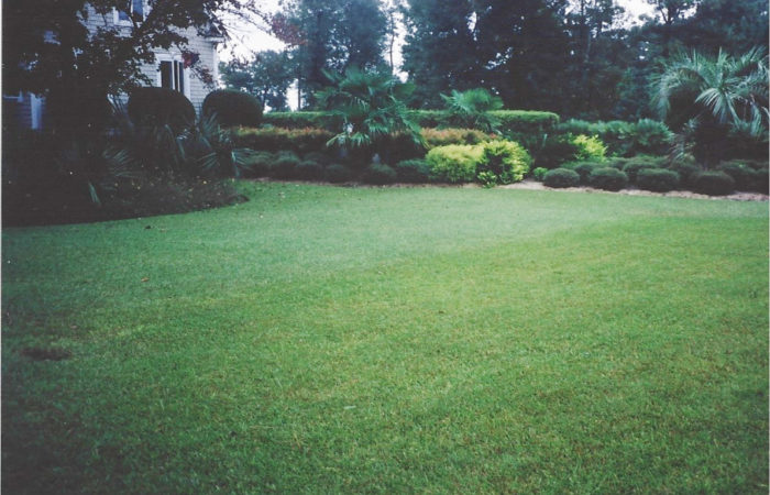 Pros And Cons Of Different Sod Varieties ⋆ Superior Sod