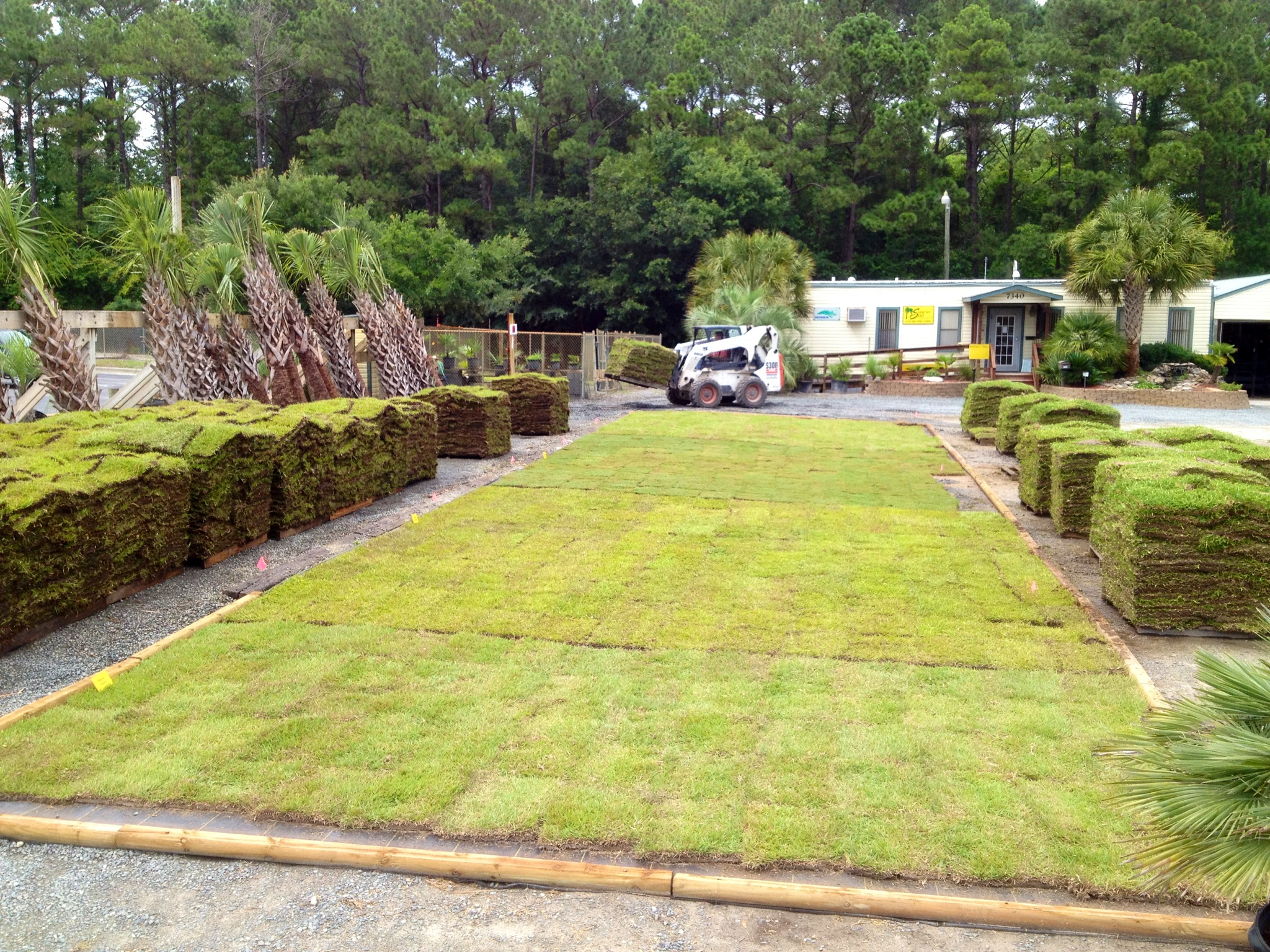 Pic New Sod Nursery Superior